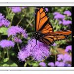 Apple iPhone6 Flicker