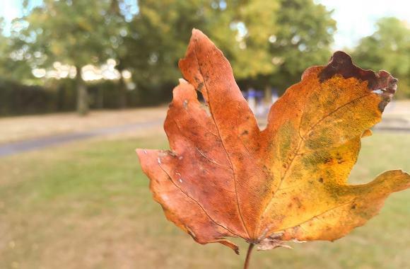 bokeh-leaf
