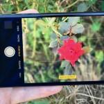 ポートレートモード iPhone7 Plus