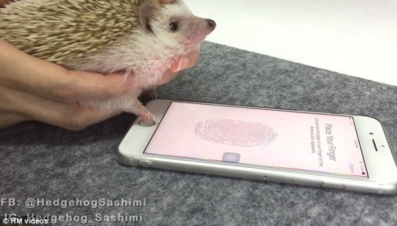 iphone touch id ハリネズミ