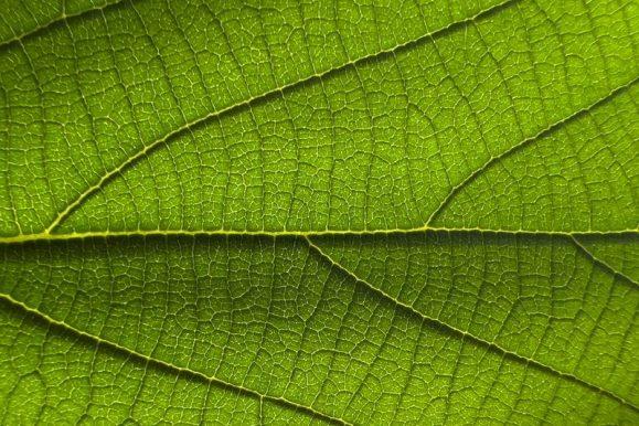 iPhone13 Proのマクロモードで撮影した葉っぱ
